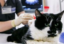 Most infected pets tend to be asymptomatic or display mild Covid symptoms
