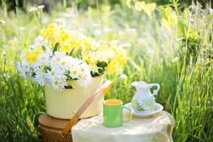 daisies-1466860_960_720