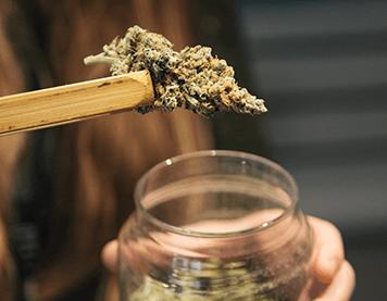 Recreational Marijuana Bud