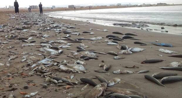 الطقس الحار يتسبّب في نفوق الآلاف من الأسماك