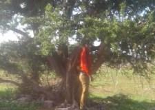 جثة معلقة إلى جذع شجرة تستنفر الأجهزة الأمنية