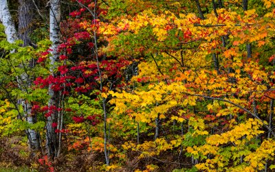Autumn-Color Pictured Rocks National Lakeshore, Michigan,