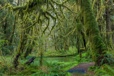 Quinault-Rainforest_011-copy