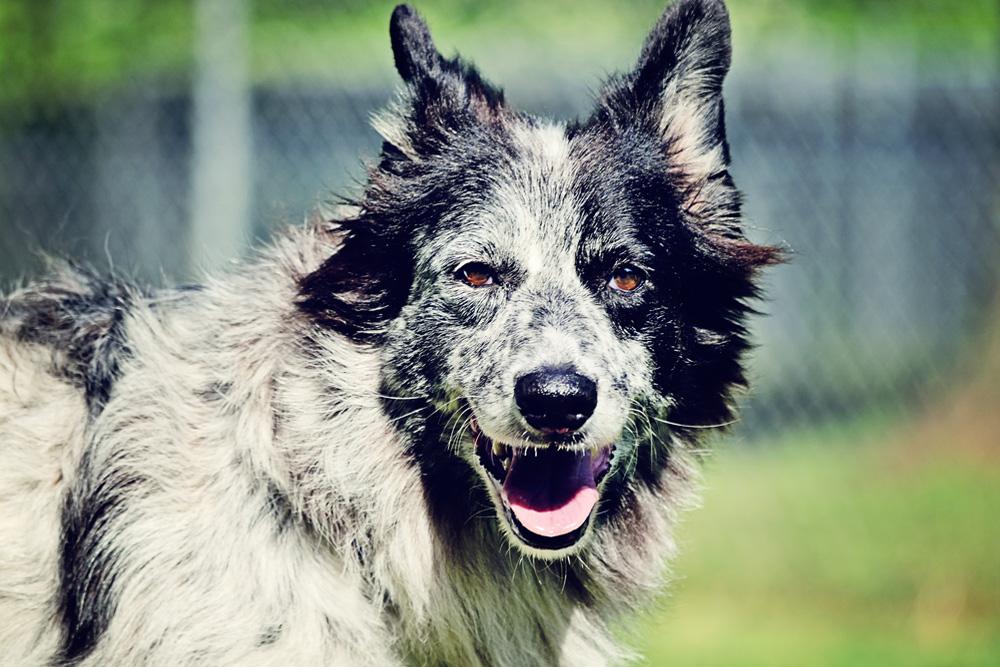 Charleston Dog Boarding - Chucktown Charley - Charleston's Boutique Pet Retreat