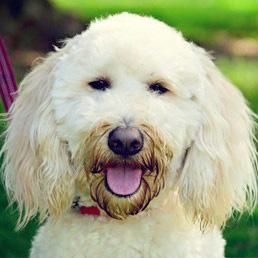 Dog Training Charleston