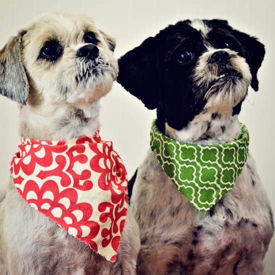 Charleston Dog Grooming Shih Tzus