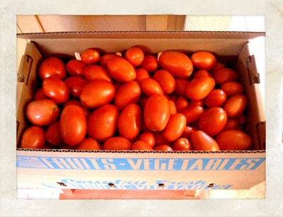 10q-tomates_1.jpg