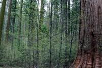 big-trees-park