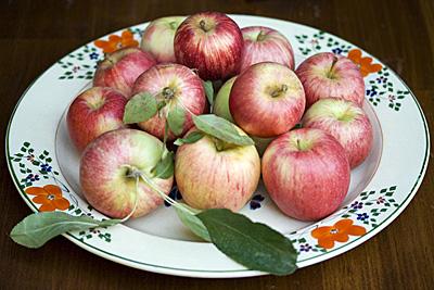 gala-apple_1S.jpg