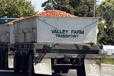 tomato-truck_2S.jpg