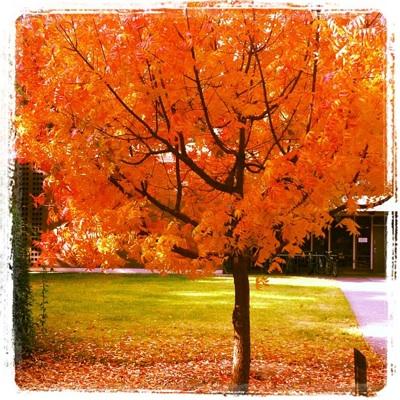 fall11_3S.jpg