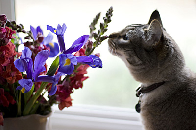 flores-sempre_4S.jpg