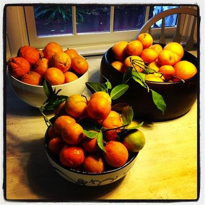 citrus-time1.jpg