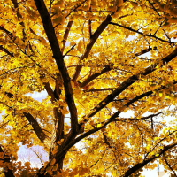 trees of fall