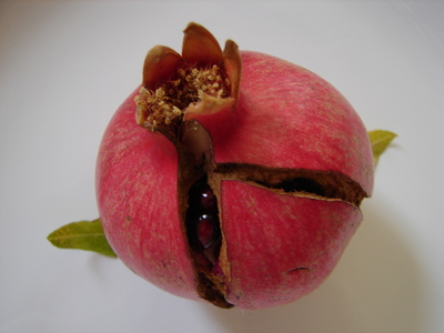 elisespomegranate.JPG