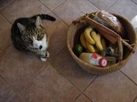 groceriesbasket_inspection.jpg