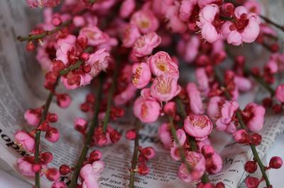 peach_blossoms_2s.jpg