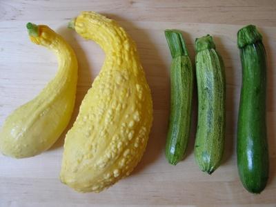 zucchinisfromalison.jpg
