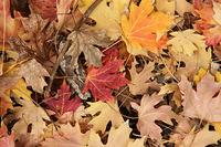outono08_12S.jpg