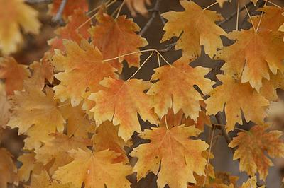 outono08_8S.jpg