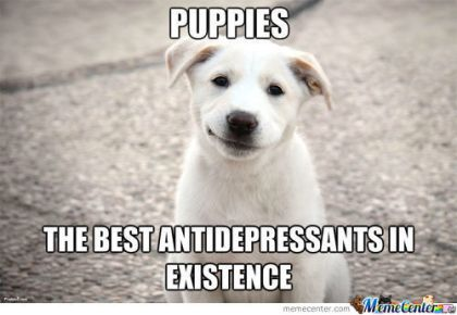 puppies_c_1982835