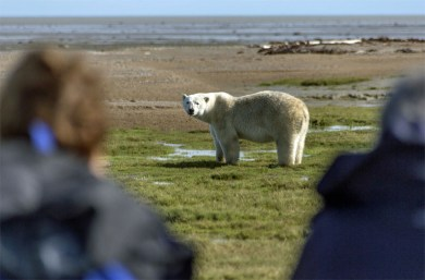 polar-bear-and-guests-nanuk-polar-bear-lodge-summer-postma