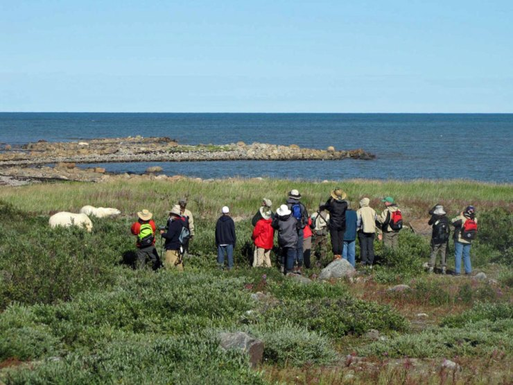Guests photographing polar bears at Seal River Lodge.