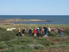 PolarBears-6-Birds&Belugas