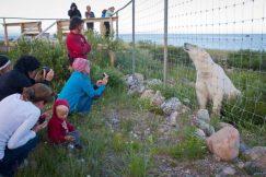 Voliva-Lodge-Bear-PolarBears-Birds&Belugas