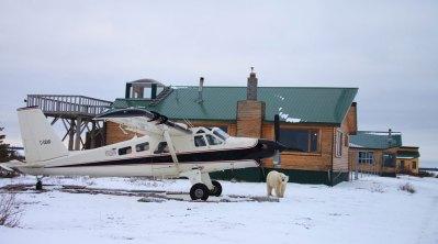 PolarBearPlaneGIB-DBennun