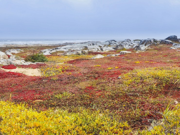 Fall colours in a wild untamed land. Photo courtesy ofSabine Ernsting and GerryNeumeister.