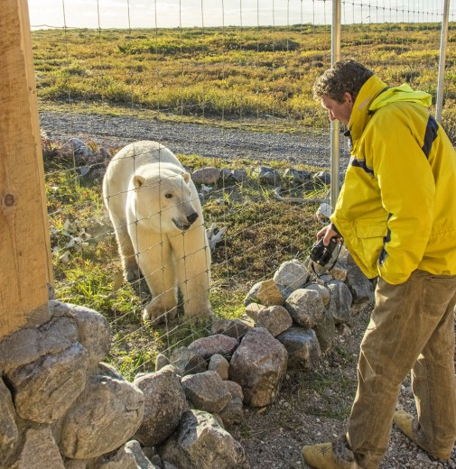 Visit with a polar bear at Seal River Heritage Lodge. Jad Davenport.
