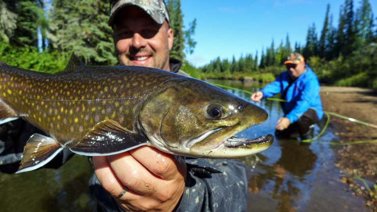 Fly-fishing for trophy sea-run brook trout at Nanuk  With polar bears!
