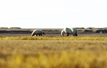 polarbearsnanukfishingtrip