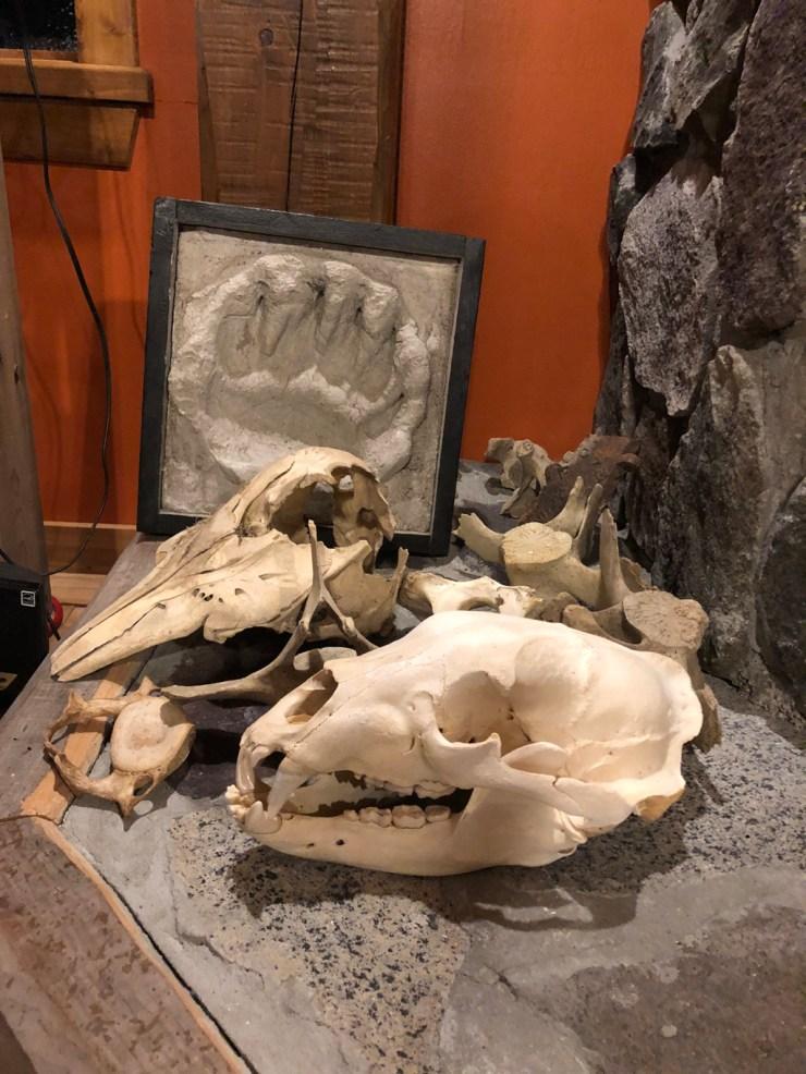Natural history artifacts at Nanuk Polar Bear Lodge.