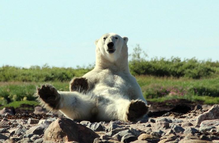 When in doubt, try the polar bear stretch. Lloyd Wilton photo.
