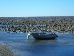 Polar bear inspects Oddney II at Seal River.