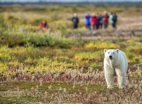Guests on polar bear safari at Seal River Heritage Lodge.