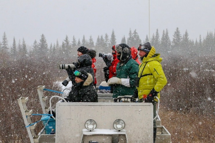 Snow flurries on the Polar Bear Photo Safari at Nanuk Polar Bear Lodge. Photo by guest Karl Biesemier.