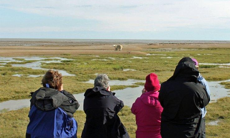 Guests photographing polar bears at Nanuk Polar Bear Lodge.