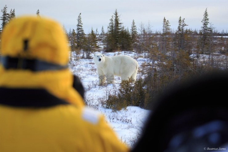 Guests photographing a polar bear on the Great Ice Bear Adventure at Dymond Lake Ecolodge.