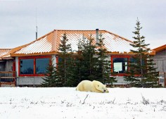 Hon. Mention - Lodge Ext/Int. - T. Walter J. Diehl - Polar Bear Photo Safari Nanuk