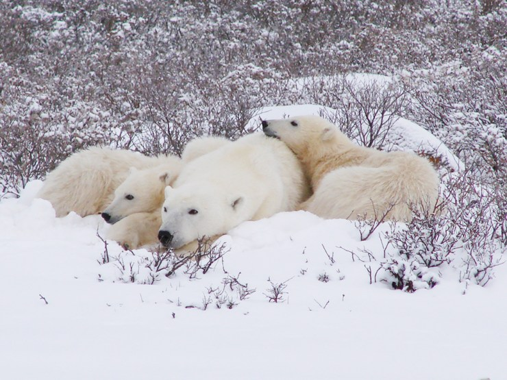 Cuddle time at Dymond Lake Ecolodge. Waiting for the ice. Graham Copping photo.