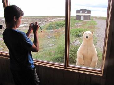 polar-bear-tour-churchill-wild-seal-river-heritage-lodge-mike--reimer