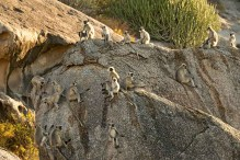 wilderness-drive-monkeys1k