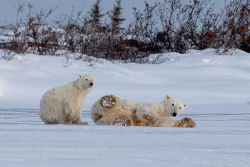 Mom and cub at Seal River.