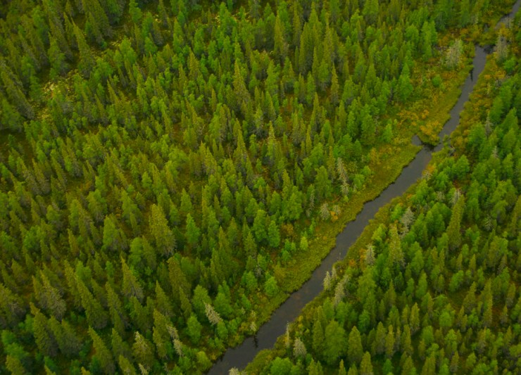 The boreal forest plays a huge role in mitigating the effects of climate change. Cheryl Hnatiuk photo