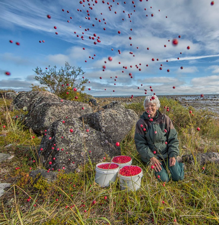 Helen Webber after a successful day of cranberry picking at Seal River Heritage Lodge. Robert Postma photo.
