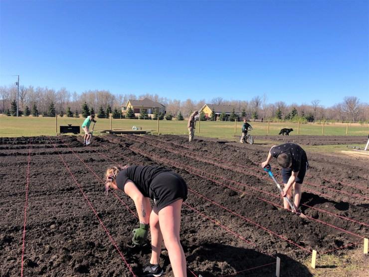 Prepping plant beds at Arctic Organics.