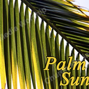 Palm Sunday Background Christian Worship Background. High quality worship images for use to spread the Gospel and enhance the worship experience.